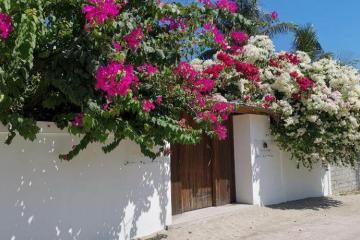 Отель Holiday Cottage (Thoddoo) Мальдивы, Ари Атолл, фото 1